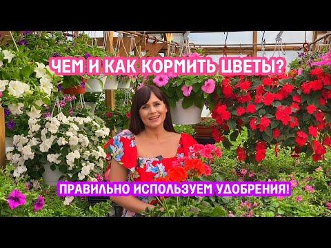 Вопрос: Нужно ли применять севооборот для цветов?