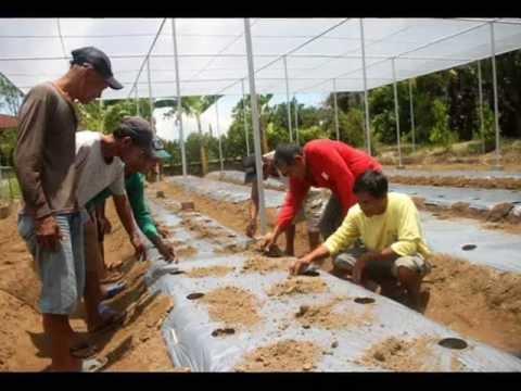 Bulacan vegetable farming