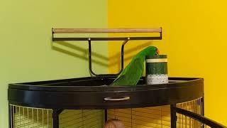 Попугай эклектус и коробка с игрушками