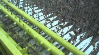 Жатки сплошного среза для подсолнечника Maizco (Аргентина)