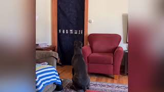 Dog's vs. Magic