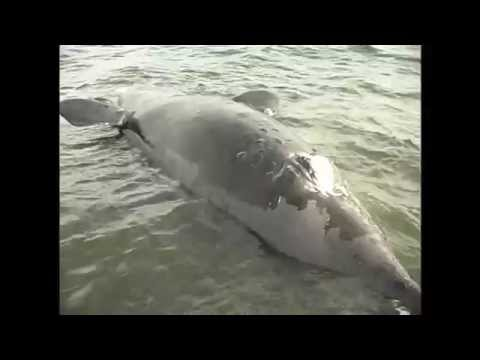 "Right Whale ""Lucky"" - Recovery"