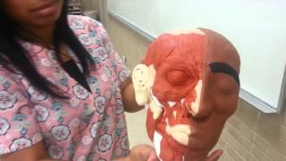 Restorative arts video featuring student: Elisha Wright