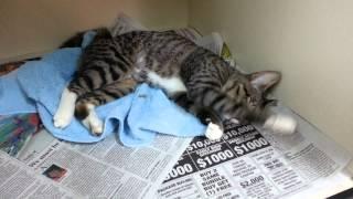 Kitty dreams courtesy of buprenorphine