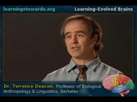Learning Evolved Brains