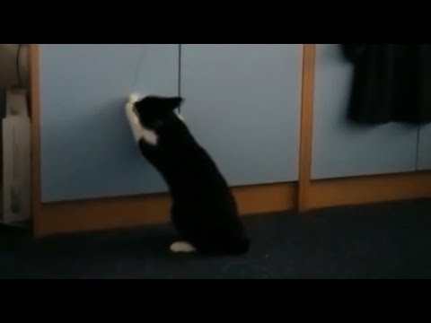 Funny cat playing and jumping