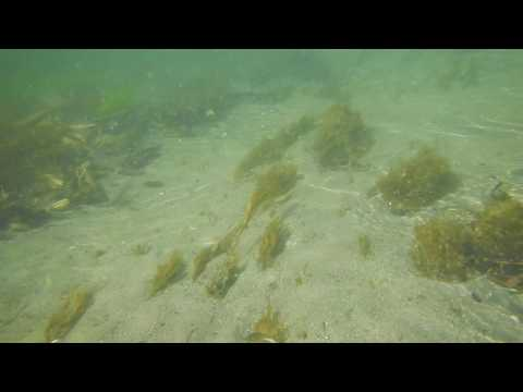 Elger Bay Underwater