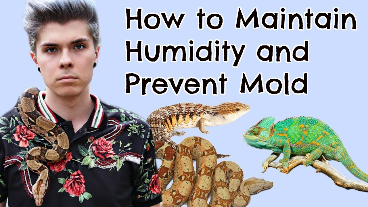 how-to-maintain-humidity-in-reptile-enclosures-and-preventing-mold