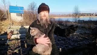 Куда уходит душа животных (следите за котом)