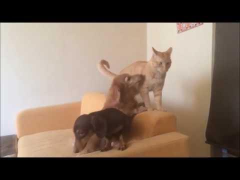 犬部屋に行ってみた。 I went to a dog room.『保護猫るる らら物語』