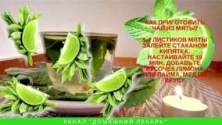 Чай с мятой: польза и вред — Домашний лекарь — выпуск № 101