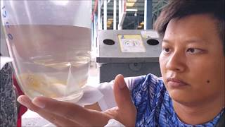 LIOW VIDEO: Visit QianHu & OTF fish farm to buy Arowana 逛鱼场买龙鱼