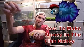 How To Make Money In The Fish Hobby - Buy More Pay Less