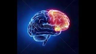 Ap Psych-Rap - Teile Des Gehirns