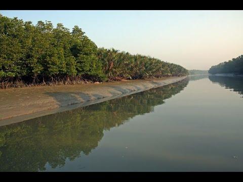 Sundarban is Beautiful Places Bangladesh // সুন্দরবন বাংলাদেশের সুন্দর স্থান হয়