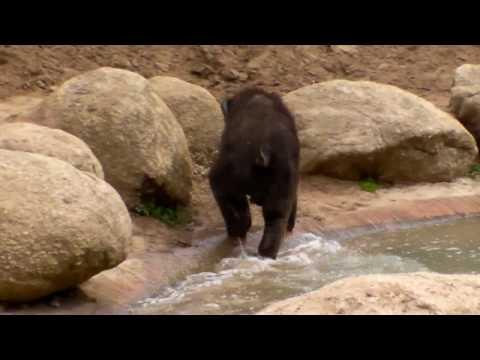 baby elephant mali @ Melbourne zoo 6/04/2010