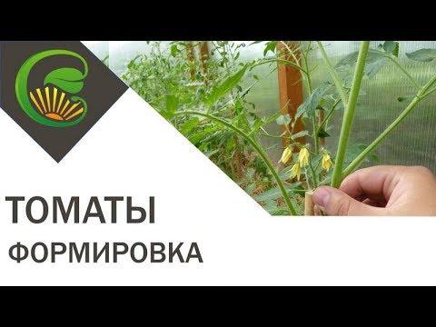 Формировка высокорослых томатов