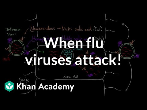 When flu viruses attack! | Infectious diseases |...