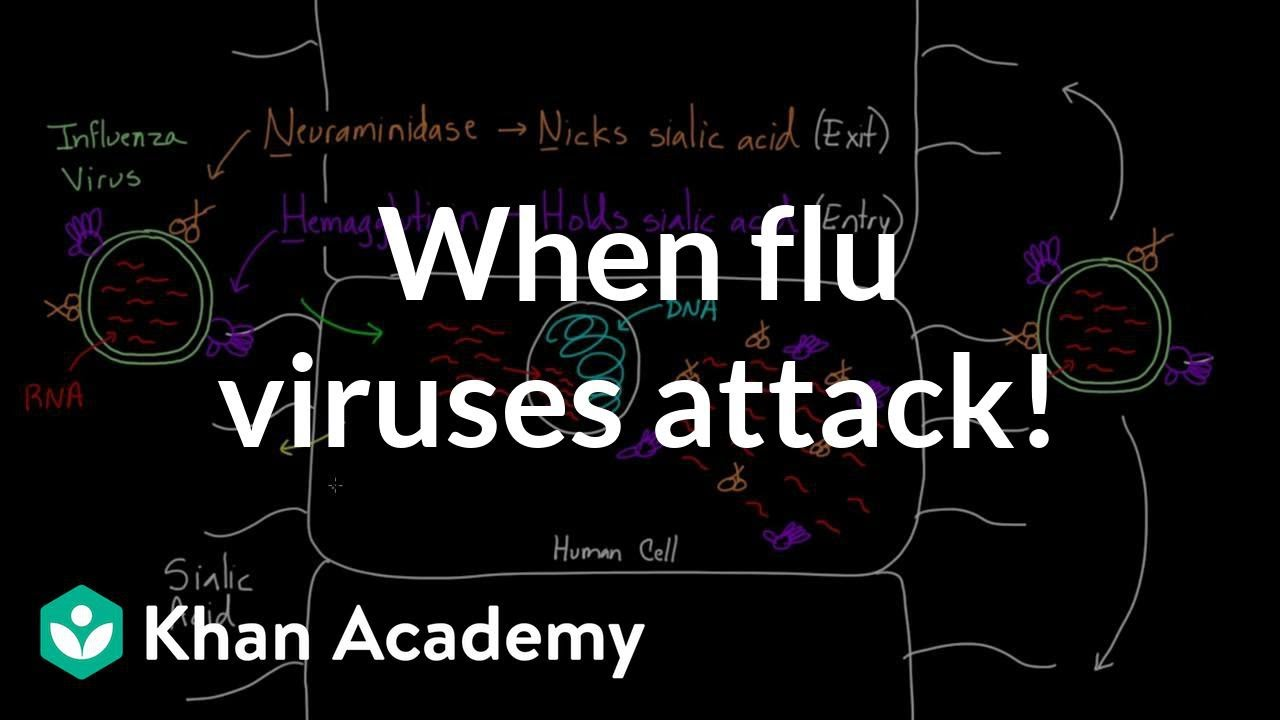 When flu viruses attack! (video) | Influenza | Khan Academy