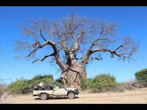 Incredible Safari Vacation at Sausage Tree Camp, Lower Zambezi, Zambia