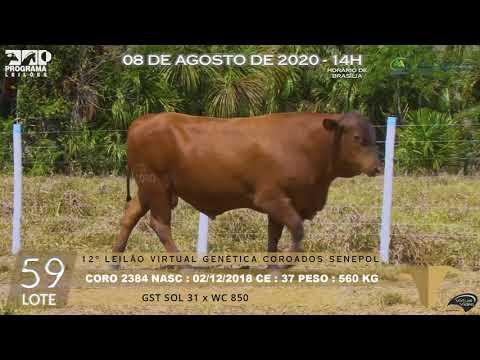 LOTE 59 CORO 2384