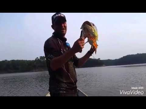 Pescaria Amazonas Rio Juma - Nov