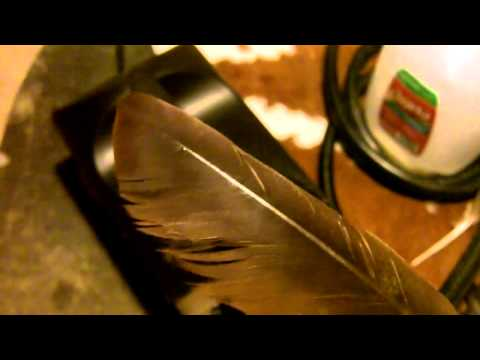 182 - How To Repair Feathers With Steam