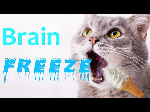 funny cats and dogs getting brain freeze