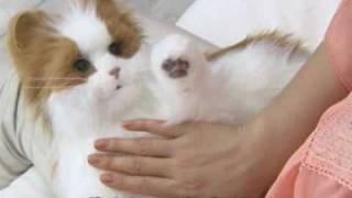 Yume Neko Venus Robotic Cat from Japan - JapanTrendShop