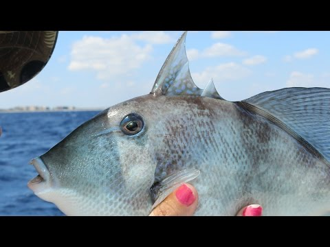 The Fish With Human Teeth!