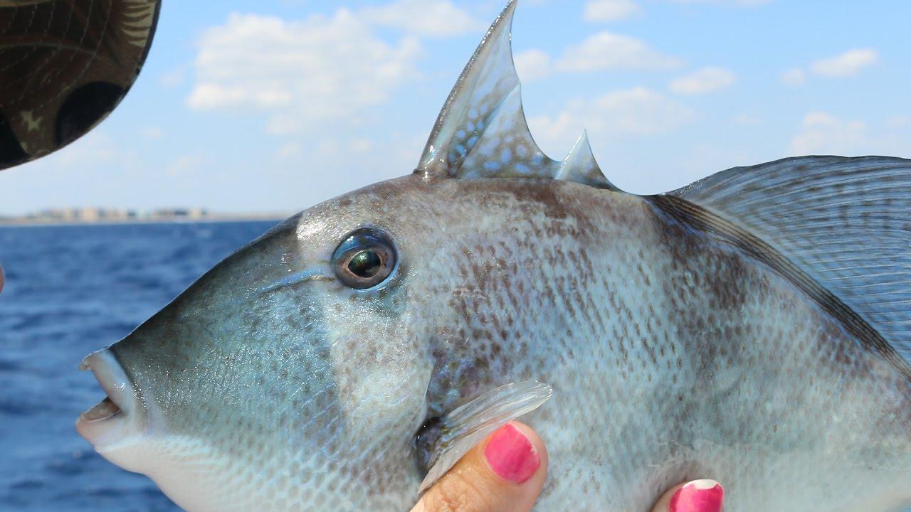 The Fish With Human Teeth! - YouTube