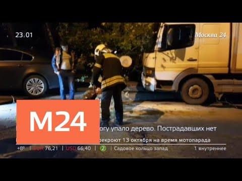 Дерево упало на дорогу на юго-западе Москвы - Москва 24