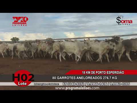 LOTE H02
