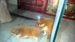 Repeat youtube video Animal sex 18+by Khi~C0n :) Part 1