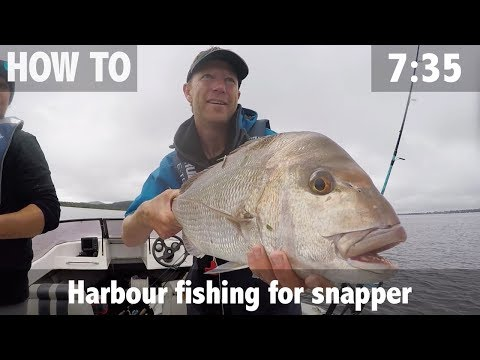Harbour Fishing For Snapper