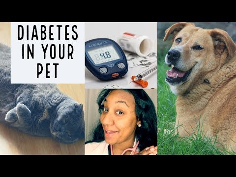 diabetes-in-your-dog-or-cat|-what-you-need-to-know