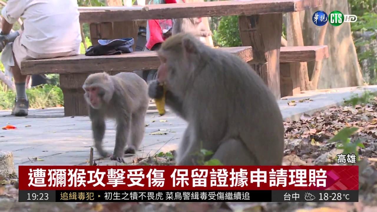 恐養成搶食習慣 亂餵獼猴開罰1萬 - YouTube
