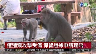 恐養成搶食習慣 亂餵獼猴開罰1萬