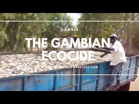 This is the Gambian Ecocide - the video everyone should see