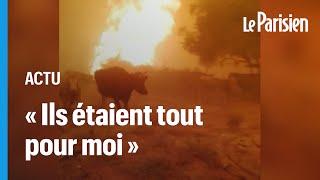 Turquie : des fermiers tentent  de sauver leurs animaux des incendies qui ravagent le pays