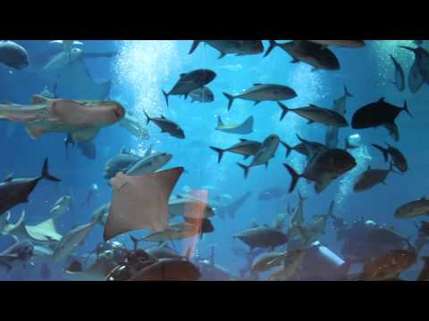 Dubai Aquarium & Underwater Zoo (1080p HD)
