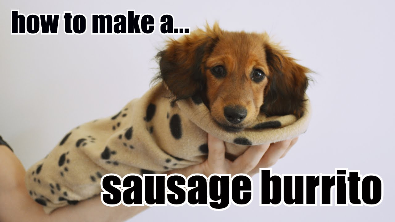 How to make a sausage burrito - Cute dachshund puppy - YouTube