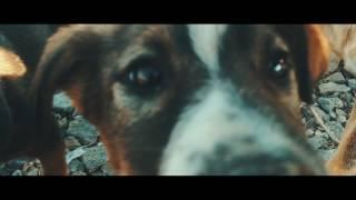 Социальный ролик. Любите животных! Social movie about street animals.