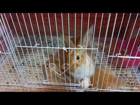 🇦🇪UAE Dubai Rabbits Opening Door //   How Drinkinh Water?? #