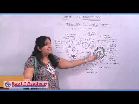 Female Reproductive System and Gametogenesis - NEET AIPMT AIIMS Zoology Video Lecture