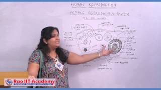 Repeat youtube video Female Reproductive System and Gametogenesis - NEET AIPMT AIIMS Zoology Video Lecture