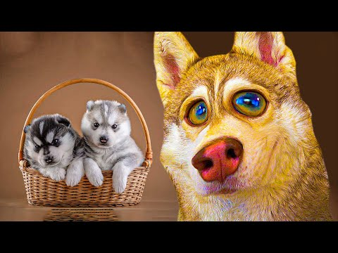 СПАСАЮ ХАСЯТ ОТ ВИРУСА!! (Хаски Бублик) Говорящая собака Mister Booble