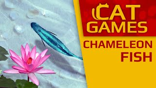 CAT GAMES - Chameleon Fish (Videos for Cats to watch) 1 Hour 60FPS
