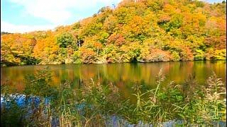 日本東北賞楓之六「白神山地12湖區世界自然遺產」2015-10-22