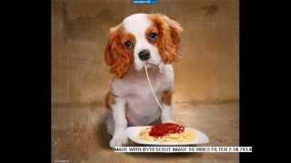 Как едят животные прикол